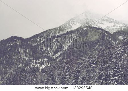 Far away mountain peak covered by clouds and snow under overcast sky with conifer trees in the foreground