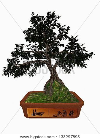 Hornbeam, carpinus betulus, tree bonsai isolated in white background - 3D render