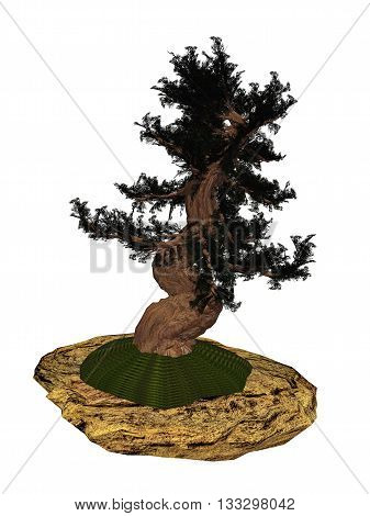 Western juniper, juniperus occidentalis, tree bonsai isolated in white background - 3D render