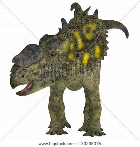 Pachyrhinosaurus Dinosaur on White 3D Illustration - Pachyrhinosaurus was a ceratopsian herbivorous dinosaur that lived in the Cretaceous Period of Alberta Canada.