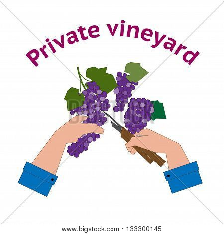 Vineyard logo. Design concept for private vineyard in flat style.