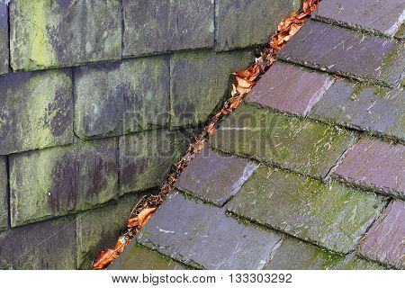 Rain, Mold and Leaves on Wet Roof Slates