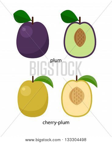 Fruits of plum and cherry-plum and their cross-sections