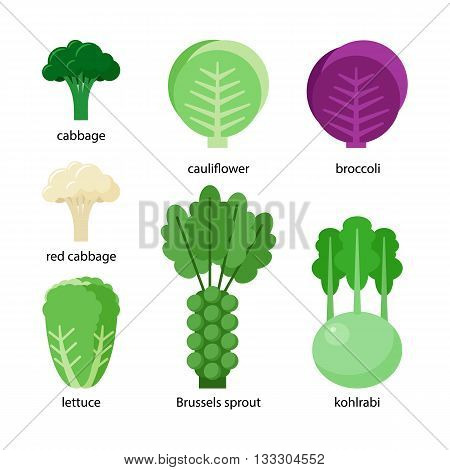 Set of different cabbage: broccoli, cabbage, red cabbage, kohlrabi, lettuce, cauliflower, brussels sprout,