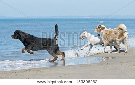 dogs playing on the beach in France
