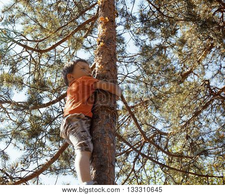 little cute real boy climbing on tree hight, outdoor lifestyle concept close up