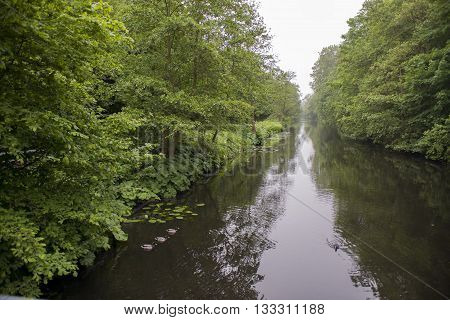 Overview of a Canal in a Forest in Country Estate Oosterbeek Wassenaar the Netherlands with three Mallard (Anas platyrhynchos) drake's in a Corner