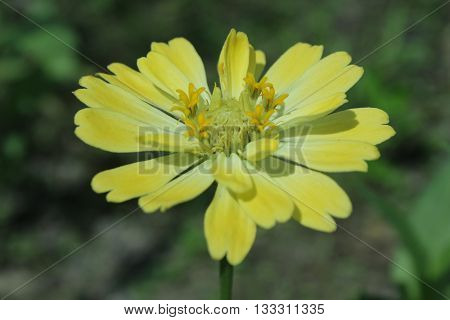 The beast of yellow flower in the forest