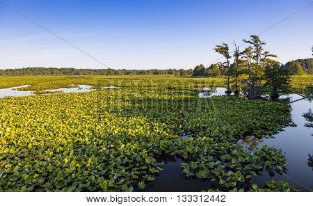 View of swamp at Reelfoot Lake and wildlife refuge