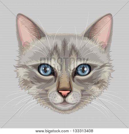Drawn stylized muzzle of gray cat with blue eyes and pink nose