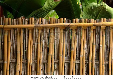bamboo fence background or texture, natural bamboo background