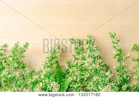 Tender medical neem leaves and flower on wood background