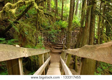 Wooden Bridge in a Moss Forest in Olympic National Park