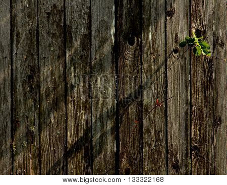 Afternoon sunshine on a board fence - a minimalist view