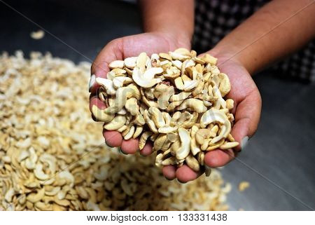 Cashew Nuts In Hands