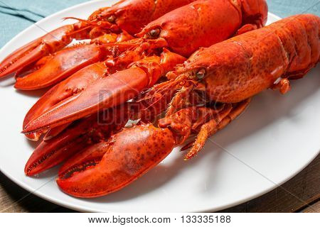 Cooked red Lobsters served on white plate ready for eating