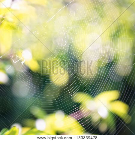 Cobweb in green garden with bokeh background.