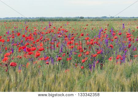 colorful flowers on field in summer