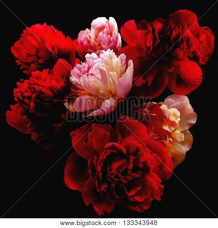 Stylized bouquet of red and white peonies isolated on black background