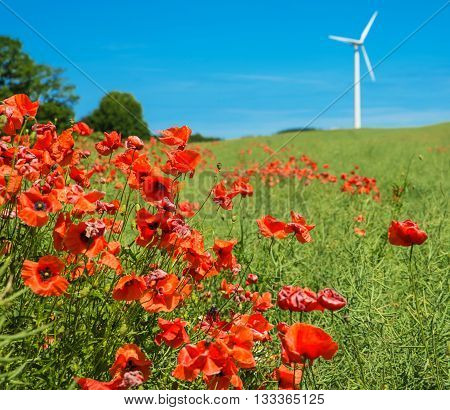 poppy om a field with a wind turbine in the back