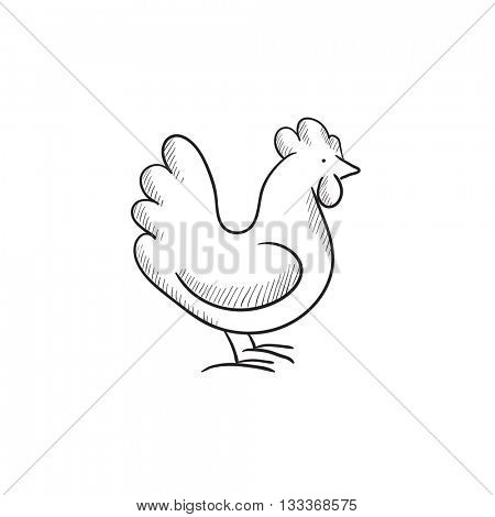 Chicken sketch icon for web, mobile and infographics. Hand drawn chicken icon. Chicken vector icon. Chicken icon isolated on white background.