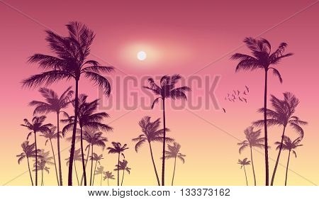 Silhouette of tropical palm trees at sunset or sunrise with cloudy sky . Highly detailed and editable