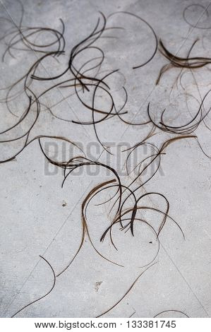 Hair Clippings strand on the floor at the hairdresser salon for use as texture or background.