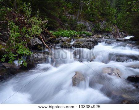 Beautiful Clean Mountain Creek Flowing Over Rocks