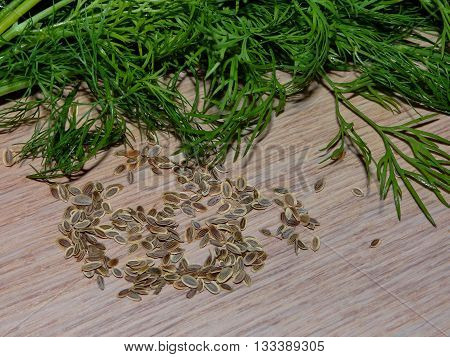 fennel seeds, which are lying next to dill on wooden boards
