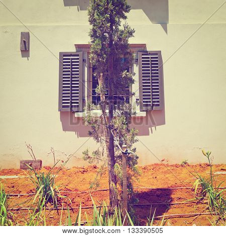 Cypress on the Backgraund of the Old Building in Tel Aviv Israel Retro Effect