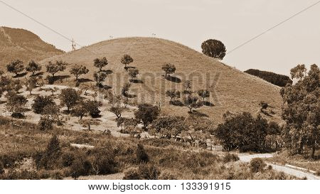 Hill in Sicily with Olive Trees Vintage Style Sepia