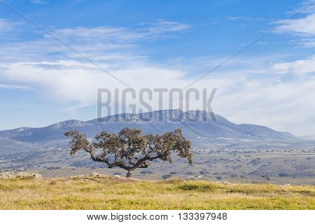 Fantastic landscape with mountains and holm oak, Extremadura, Spain