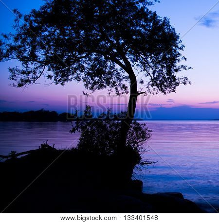 SILHOUETTE OF A TREE DURING BLUE HOUR AGAINST A PURPLE BLUISH SKY