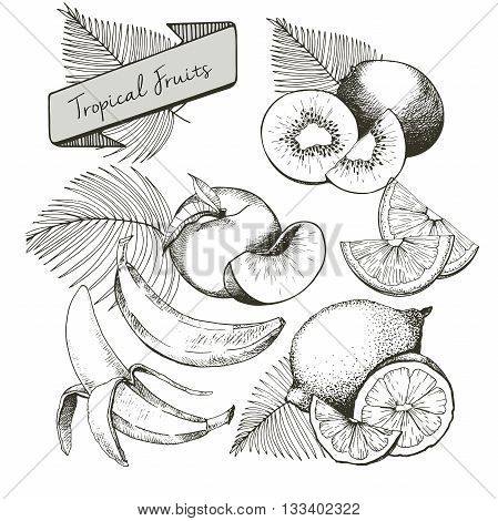 Vector set of tropical fruits. Banana peach lemon kiwi and palm leaves in vintage engraved style. Hand drawn exotic organic tasty fruits isolated on white background.