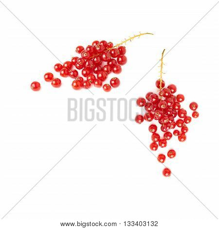 Set of Red ripe  Currant berries isolated over white background