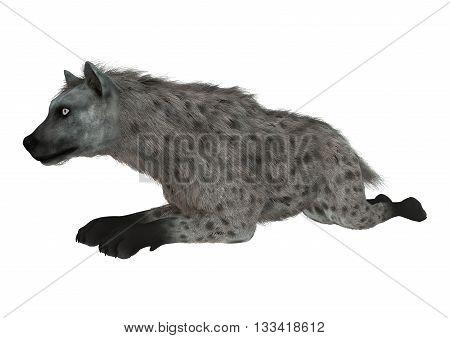 3D Rendering Hyena On White