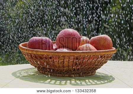 The group of red apples in the water stream standing in the basket outdoors