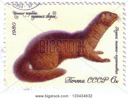 Ussr - Circa 1980: A Stamp Printed In The Ussr Shows Fur Mink Dark Brown, Circa 1980