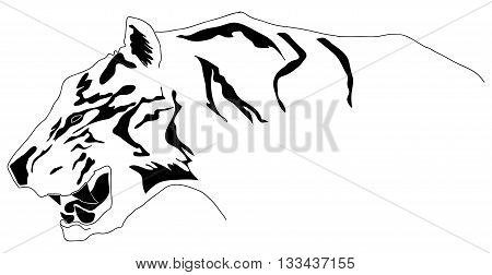 Tiger hand drawn had in EPS 8 format
