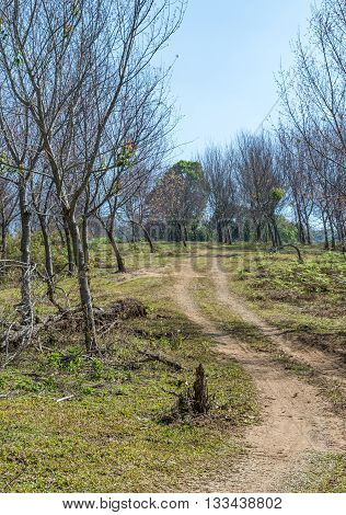 Lonely dirt road to the top of hill in the dry forest of the national park.