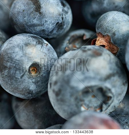 Ripe bilberry or blueberry as texture background