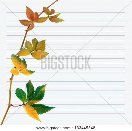 Multicolor Branch Of Grapes Leaves On Notebook Paper