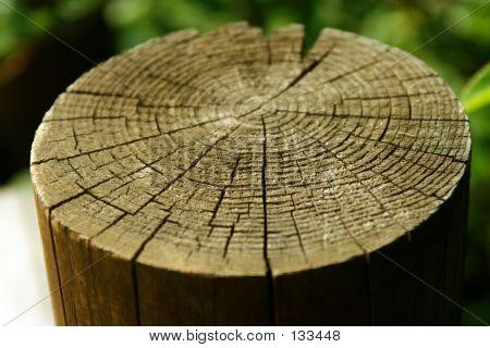 Tree Trump