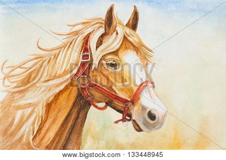 watercolor hand drawn horse head illustration on background