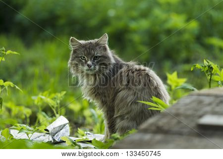 Grey Cat On A Background Of Green Grass