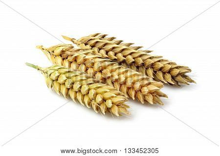 Three wheat ears isolated on a white background.
