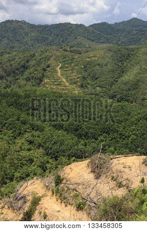 Deforestation: Borneo rainforest with patches cleared and planted to oil palm plantations