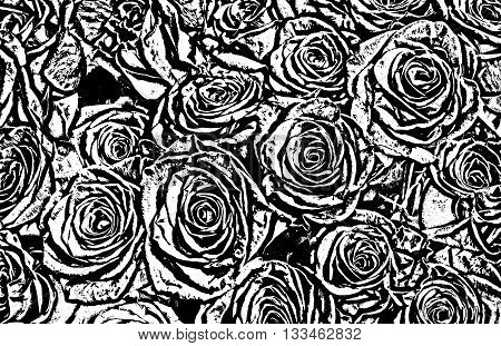 black and white roses background. natura roses background. greeting card with a luxury roses.