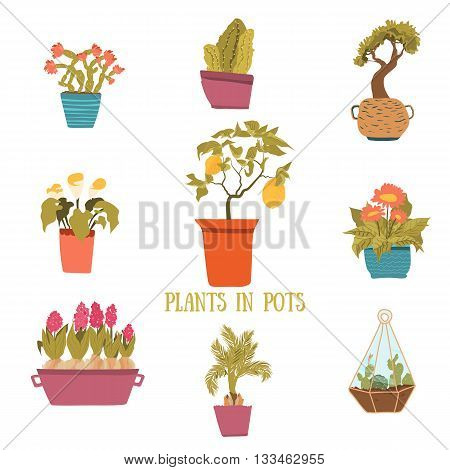 A set of colorful pots of flowers in cartoon style. Cactuses, lemon tree, calla lily, bamboo in pots. Vector illustration.