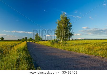 Beautiful Fields With Asphalt Road